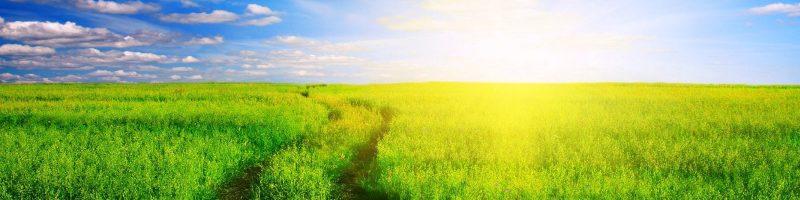 beautiful sunshine and green field